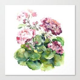Watercolor pink geranium flowers aquarelle Canvas Print