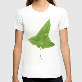 Edward Joseph Lowe - Asplenium Palmatum T-shirt