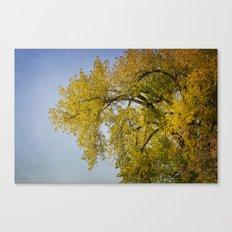 Look Up - Autumn Canvas Print