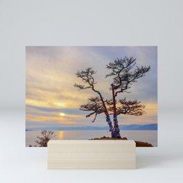 Baikal pine Mini Art Print