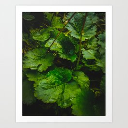 Wet Greens Art Print