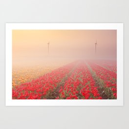 III - Sunrise and fog over rows of blooming tulips, The Netherlands Art Print