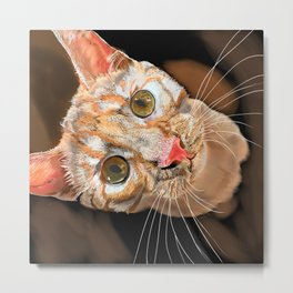Orange Tabby Cat Metal Print