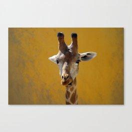 Giraffe Portrait Close up 2 Canvas Print