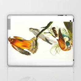 Marsh Hawk Laptop & iPad Skin