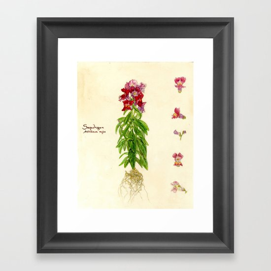 Snapdragon Framed Art Print