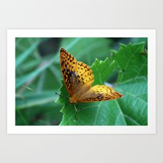 Great Spangled Fritillary Butterfly Art Print
