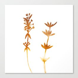 Thyme ( watercolor fill poster) Canvas Print