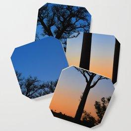 Baobab Trees in Madagascar Coaster
