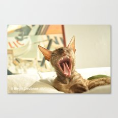 Puddin' the Wonder Cat at the end of a hard day Canvas Print