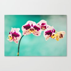 Orchids for an office lobby Canvas Print
