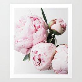 Peony, Flower, Pink, Plant, Trendy decor, Interior, Wall art, Photo Art Print Art Print