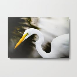 Thinking of fish for diner  Metal Print