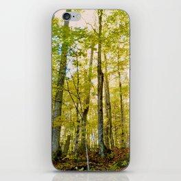 Birches in Autumn Light iPhone Skin
