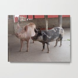 Piggies Metal Print