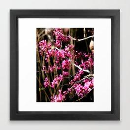 Tiny Pink Blossoms Framed Art Print