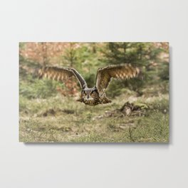 Eagle Owl In Flight Metal Print
