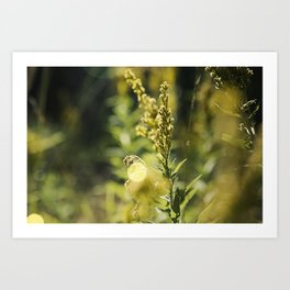 Mountain Meadows 02 Art Print