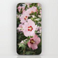 Pink Slips iPhone & iPod Skin