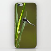 dragonfly iPhone & iPod Skins featuring Dragonfly by Christina Rollo