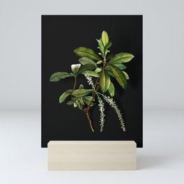 Vintage Swamp Titi Leaves Botanical Illustration on Black (Portrait) Mini Art Print