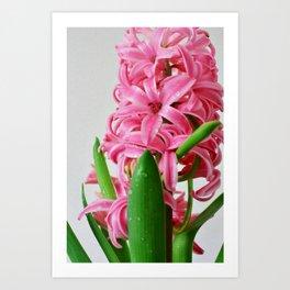 Pink hyacinth III Art Print