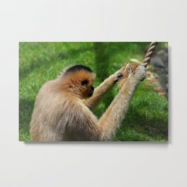 Busy, Busy, Busy Metal Print