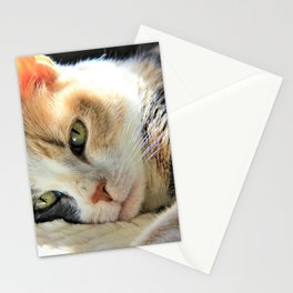 Kitty Light by Reay of Light Stationery Cards