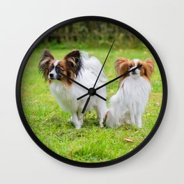 Outdoor portrait of a papillon purebreed dogs on the grass Wall Clock