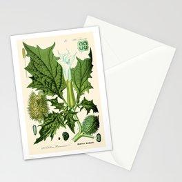 Datura stramonium (thorn apple - jimson weed or devil s snare) - Vintage botanical illustration Stationery Cards