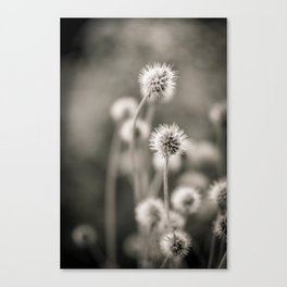 >>> Canvas Print