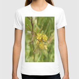 Rorippa Palustris Delicate Pale Mustard Flower T-shirt
