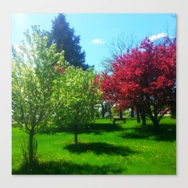 Spring in Minneapolis Canvas Print