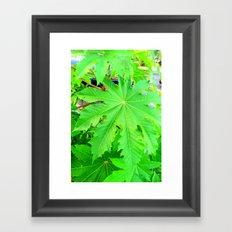 Green sleeves Framed Art Print