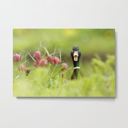 Go Home, Duck, You're Drunk! Metal Print