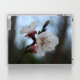 Close Up Apricot Blossom In Pastel Shades Laptop & iPad Skin