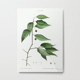 European nettle tree (Celtis australis) from Traité des Arbres et Arbustes que l'on cultive en Franc Metal Print