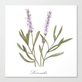 Lavender (vintage poster) Canvas Print