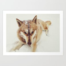 Siberian Husky In The Snow Art Print