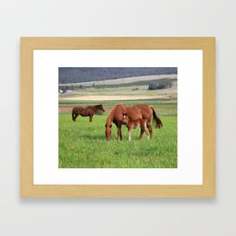 Horse Family Framed Art Print