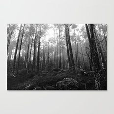 THE WOODS I Canvas Print