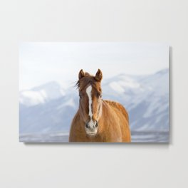 Beautiful Mountain Horse Metal Print
