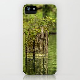 Lonely pine sprout on an old tree trunk in a lake iPhone Case