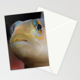 Goby Fish Staring Face Stationery Cards