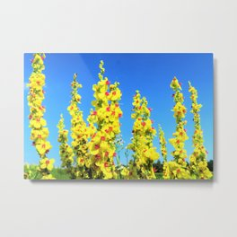 blue summer sky and yellow flowers Metal Print