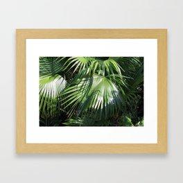 Fan Palms Framed Art Print