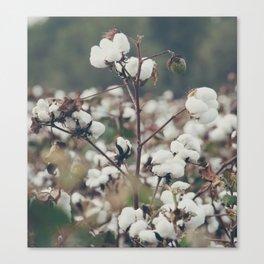 Cotton Field 8 Canvas Print