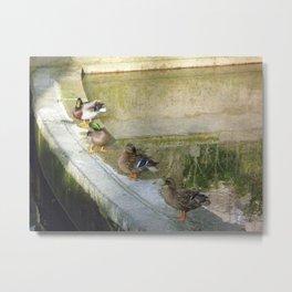 Ducks in a Row, Luxembourg Garden, Paris Metal Print