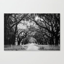 Spanish Moss on Southern Live Oak Trees black and white photograph / black and white art photography Canvas Print