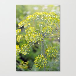 Dill in the garden I Canvas Print